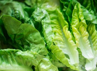 Almost 150 Now Sickened By E. Coli-Tainted Lettuce