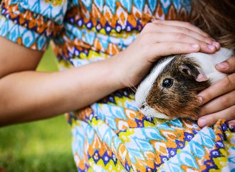 From Pigs to Peacocks, What's Up With Those 'Emotional-Support Animals'?